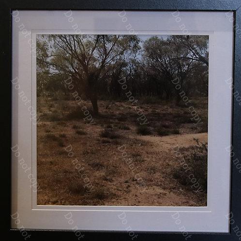 Habitat 3 by Pam Wettenhall