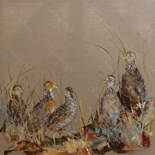 The Plains-Wanderer by Jan Lawler