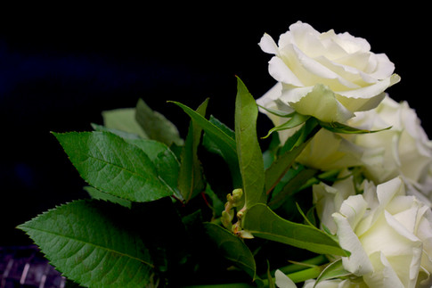 White Rose Expression