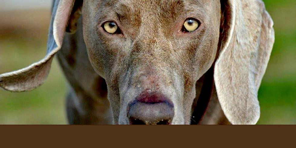 Workshop em Treino e modificação de conduta em cães