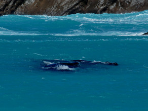 Whale Sighting in Esperance