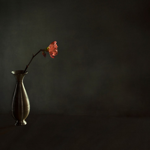 Quince Flower in Pewter Vase