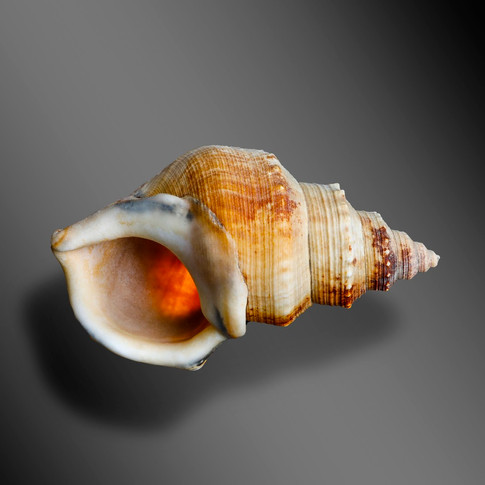 OLD SHELL, NEW PERSPECTIVE
