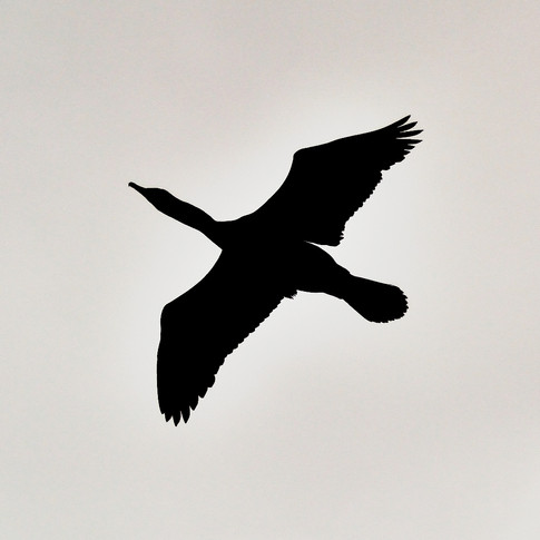 Shag in the Sky