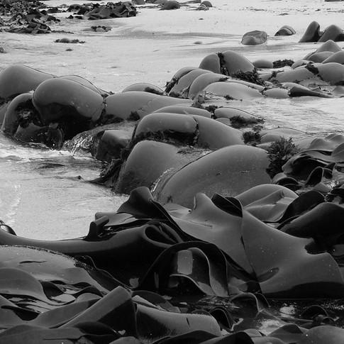 Rocks & Kelp