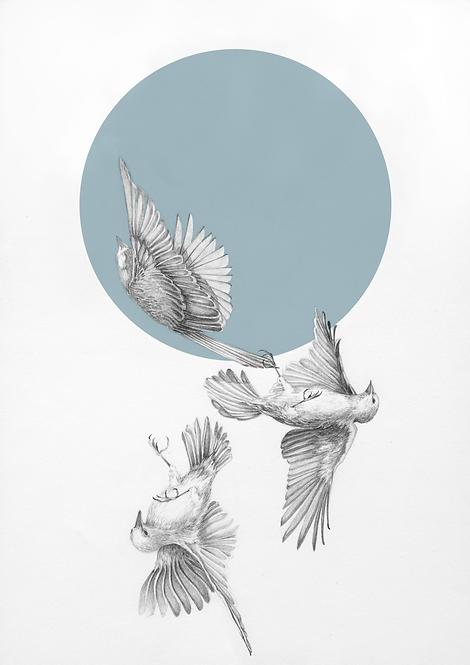 Hand drawn pencil birds. Fine art giclee print. irish artist. irish made