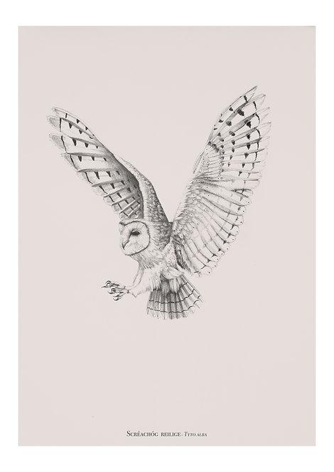 Barn owl detailed pencil drawing. giclee fine art print. irish artist