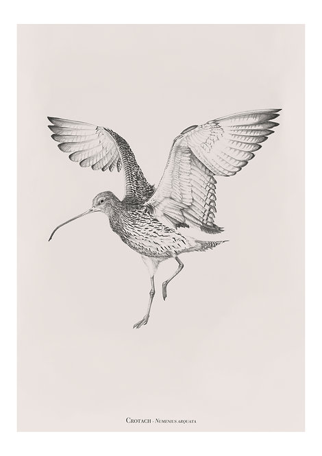 Crotach - 'Curlew'