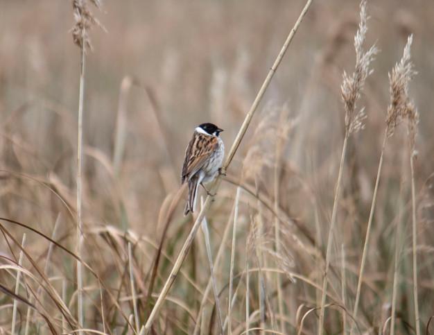 bird at pollardstown fen