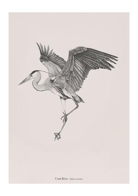 heron fine art giclee print for home interiors. irish artist. handmade pencil drawing