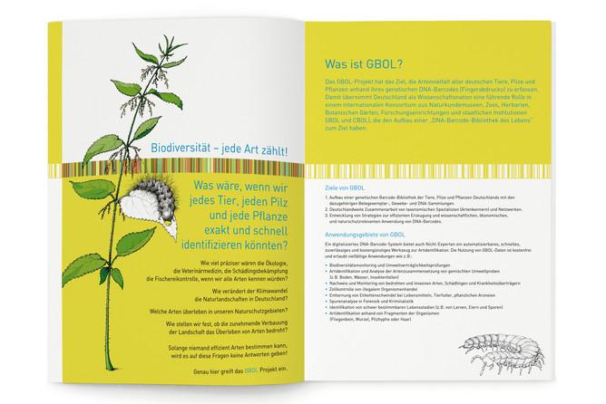 Fides Friedeberg graphic design gbol_2.j