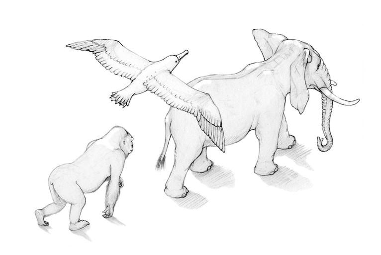 Fides Friedeberg Illustration Tiere .jpg