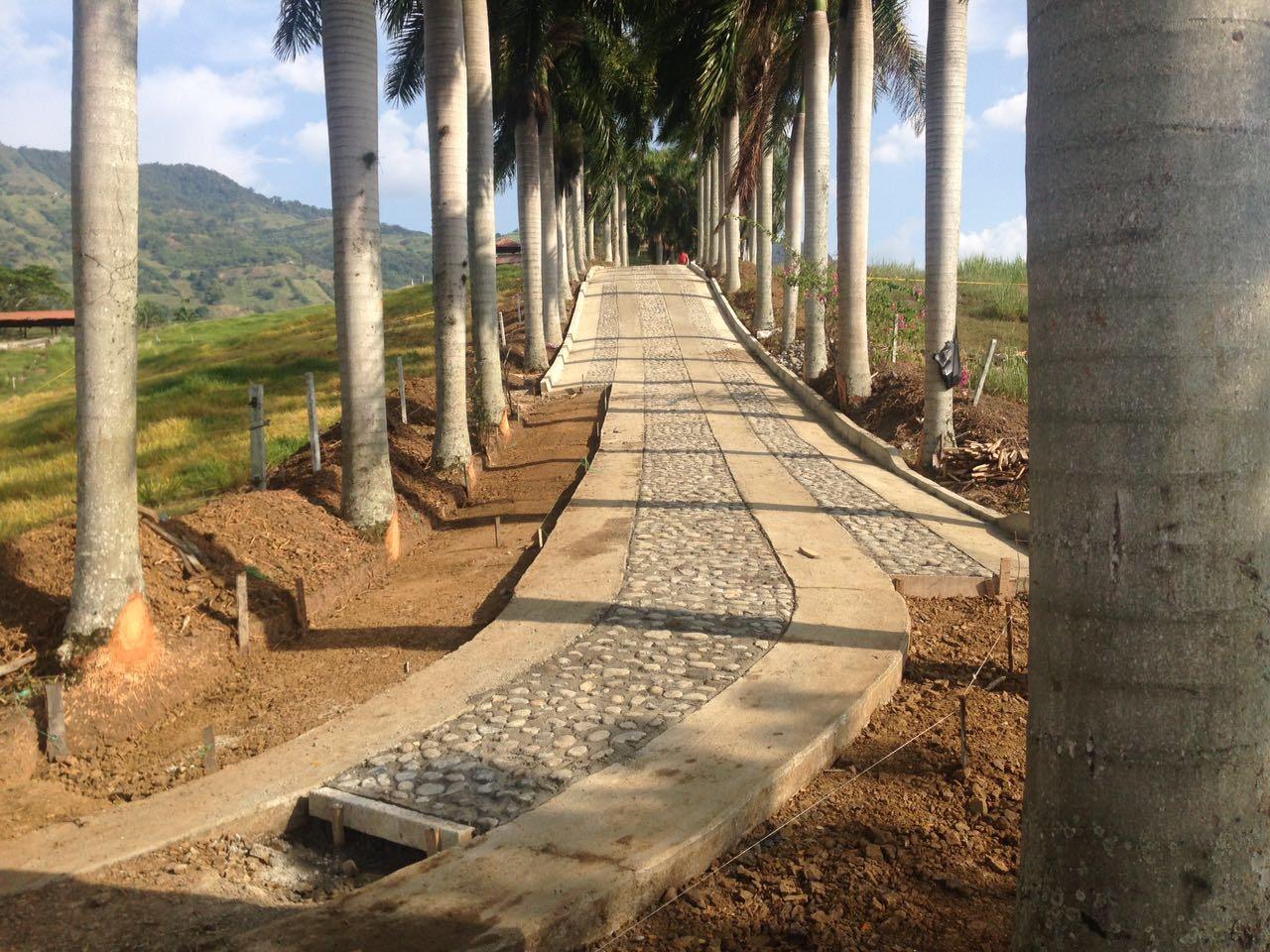 Camino de las palmas