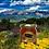 Thumbnail: Miel de montagne 500g