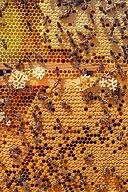 bees-4126065_1920.jpg