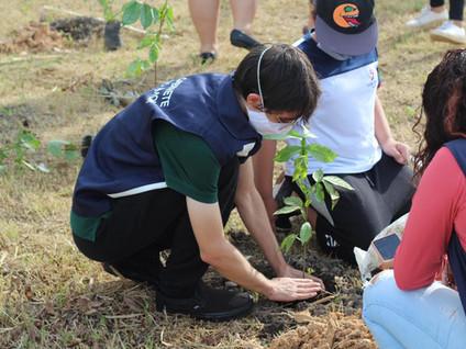 Projeto de Amom se aproxima de 2 mil árvores plantadas em Manaus