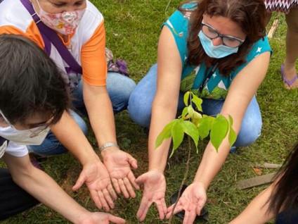 Mais de 1,6 mil árvores plantadas em Manaus pelo Projeto Galho Forte