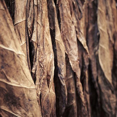 Tobacco Leaves