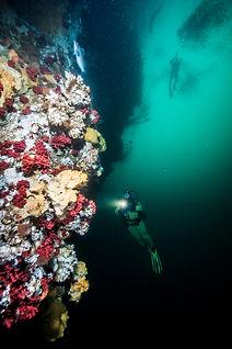 DivingBC.jpg