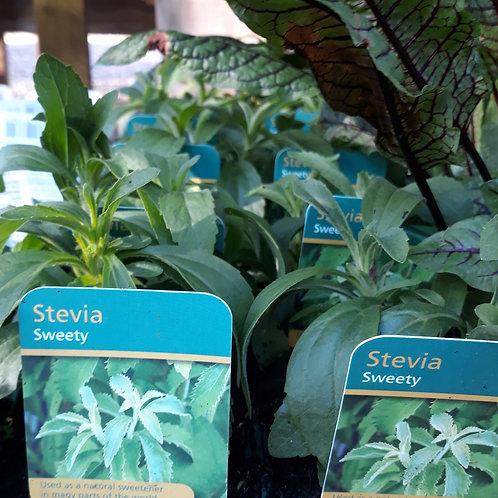 Stevia Sweety