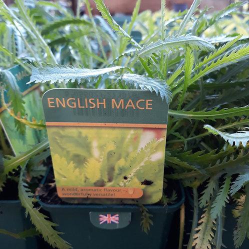 English Mace