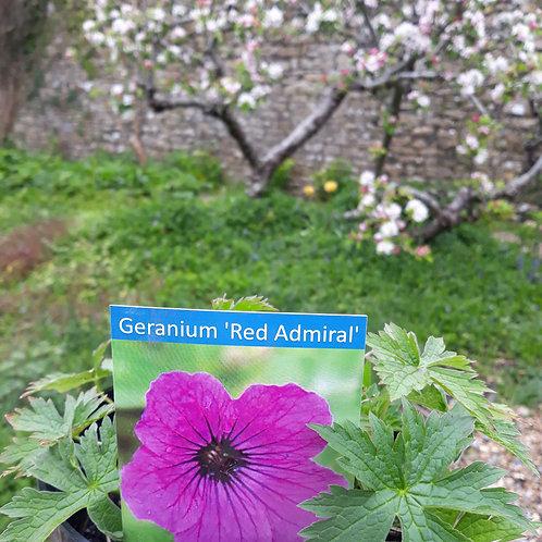 Geranium 'Red Admiral'