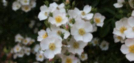 Walled Garden Plant Nursery