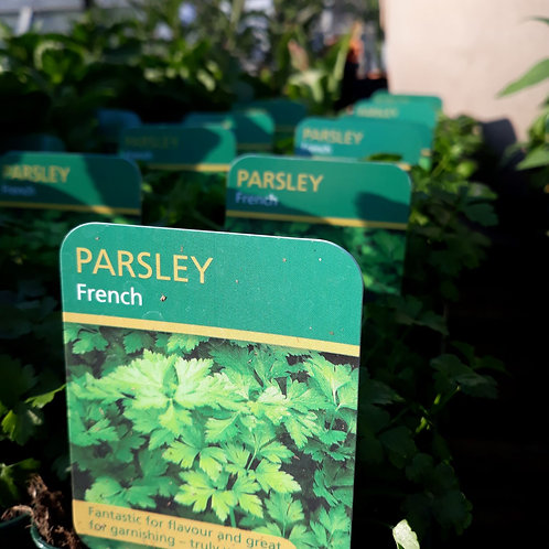 Parsley French