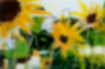 Sunflower study 2.JPG