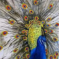 student peacock.jpg