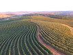 Valor da Produção Agropecuária de 2020 ultrapassa R$ 871 bi e é o maior dos últimos 32 anos