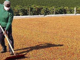 Agronegócio mineiro fecha 2020 com maior volume exportado; café tem a melhor performance desde 2014