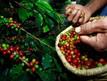 Cooxupé é contra o aumento do ICMS dos alimentos no estado de SP