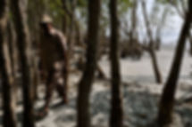 bangladesh-guide-trees.jpg