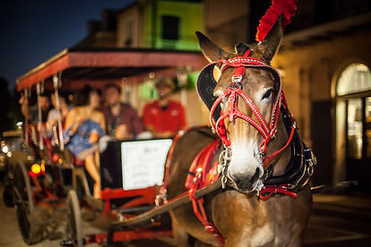 2ndStory_RoyalCarriages_108.jpg