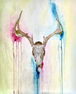 CatLandrumPhoto-DeerSkull1.jpg