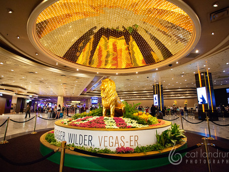 Vegas Baby! (Day One)
