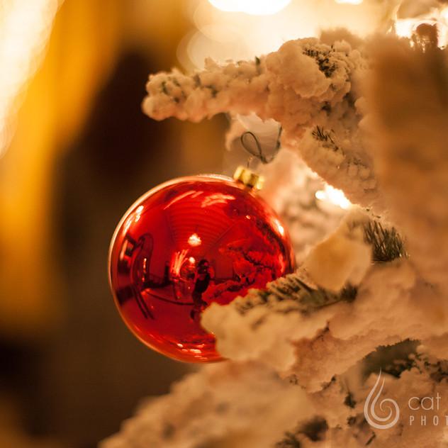 CatLandrum_ChristmasRoosevelt_1