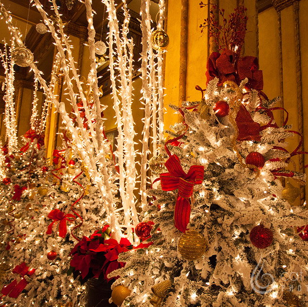 CatLandrum_ChristmasRoosevelt_4