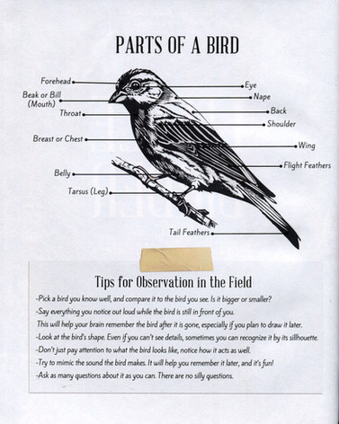 Jurors-Choice-Bird-Page.jpg