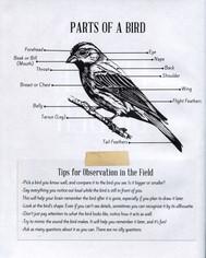 Jurors-Choice-Bird-Page.jpg