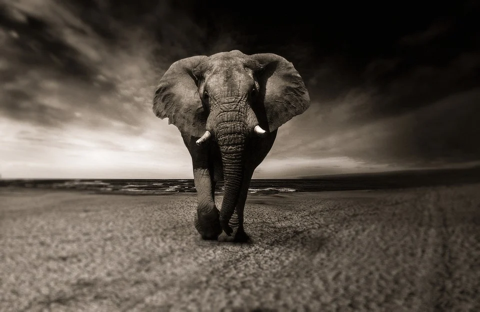 elephant-2870777_960_720.webp