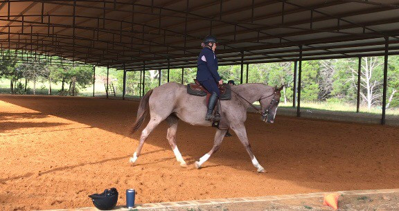 Kill Pen Rescue Tempi after two months of WD work