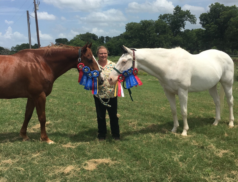 Past Wins at USEF/WDAA Show, Champion and res. champ along with high score of the day. June 2019