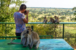 Monkeys, Tarangire National Park, Tanzania