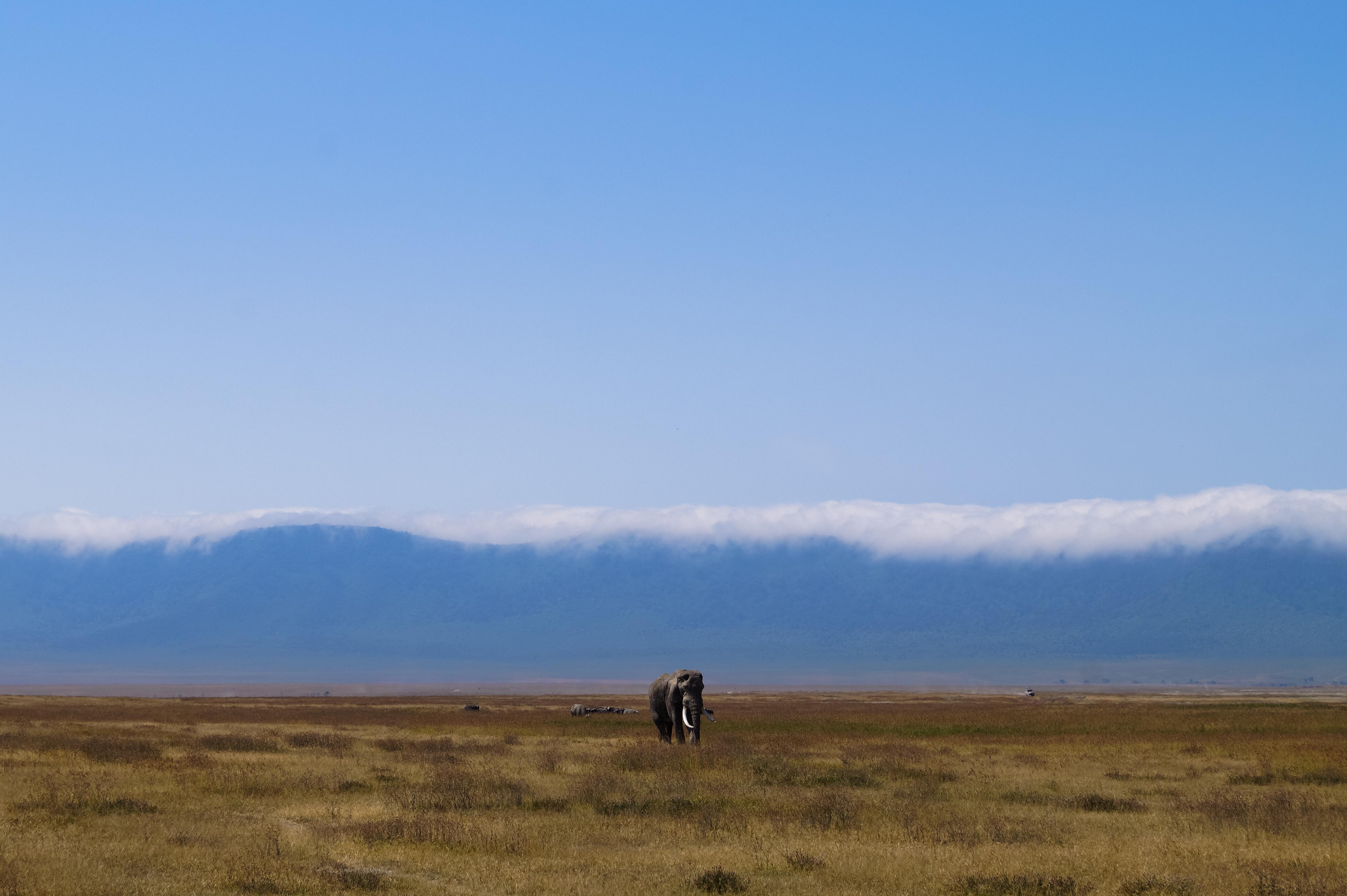 Ngorongoro Conservation Area, Tanzania