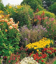 seed developments, gardening advice