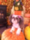 fall pet pic.jpg