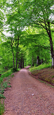 Beechgrove path.jpg
