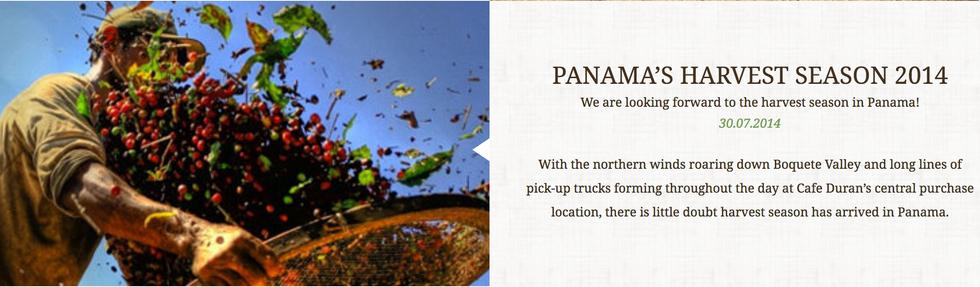 PANAMA'S HARVEST SEASON 2014